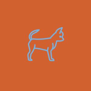 Assinatura de comida natural para cães idosos de porte Micro (até 3 kg)