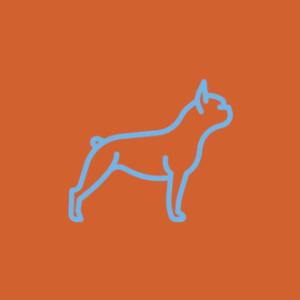 Assinatura de comida natural para cães idosos de porte Mini (5 a 10 kg)