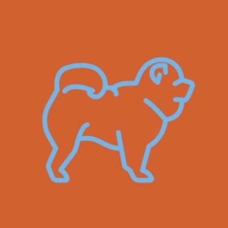 Assinatura de comida natural para cães idosos de porte Médio (15 a 25 kg)