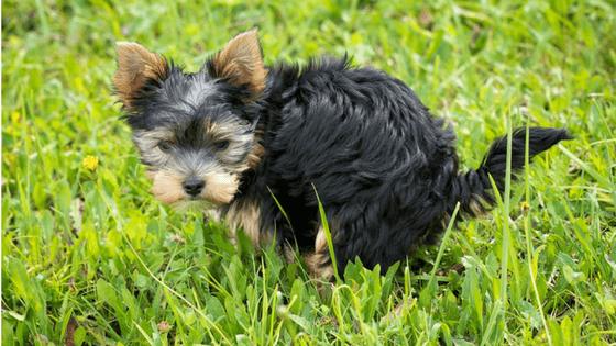 Como fica o cocô do cachorro com alimentação natural?