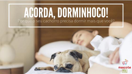 """""""Acorda dorminhoco""""! Por que seus cachorros precisam dormir mais que você?"""