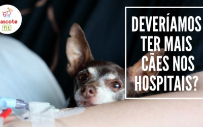 Deveríamos ter mais cães em hospitais?