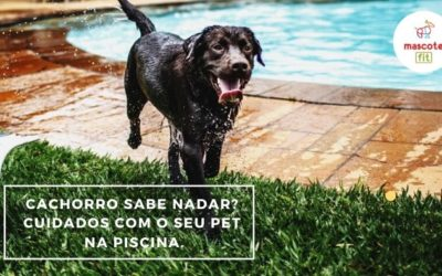 Cachorro sabe nadar? Cuidados com o seu cachorro na piscina.