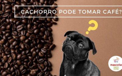 Café faz mal pra cachorro?