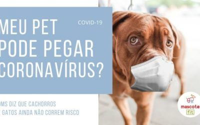 COVID-19: meu cachorro pode pegar coronavírus?