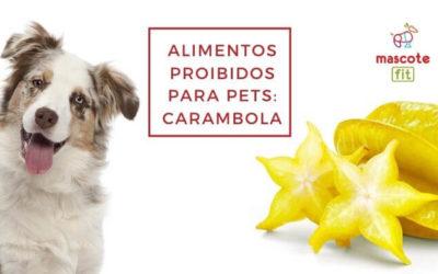 Cachorro pode comer carambola?
