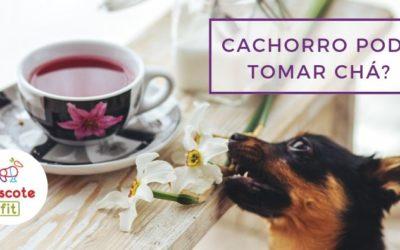 Cachorro pode tomar chá? Saiba quais tipos de chá fazem bem para pet!