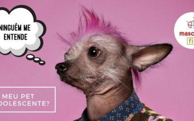 Adolescência canina (tenho um Audolescente em casa)?