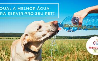 Qual a água ideal para cachorros?