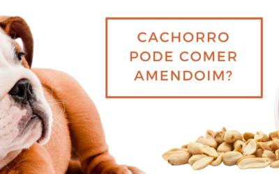 Cachorro pode comer amendoim?