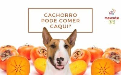 Cachorro pode comer caqui? Caqui faz bem para cachorros?