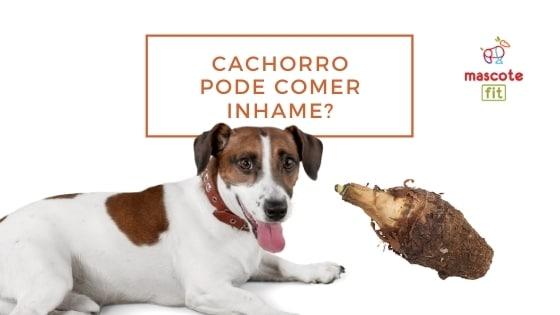 Cachorro pode comer inhame?