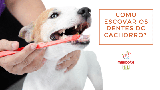 Como escovar os dentes do cachorro? Dicas práticas para ajudar o seu cachorro a escovar os dentes